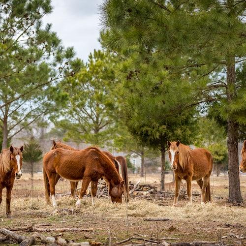 Horses Tack and Hospitality