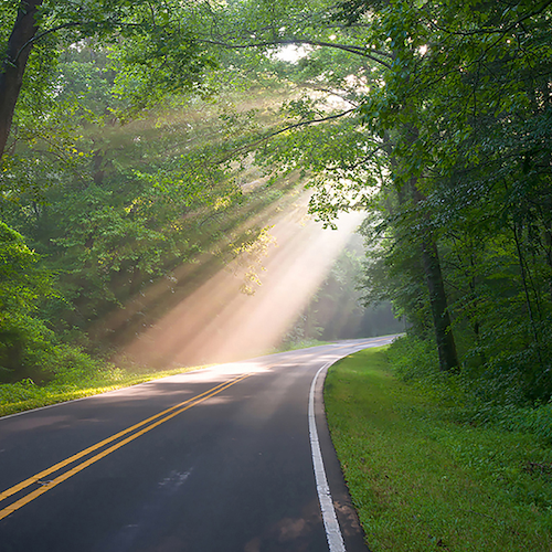Country road with sun rays through the trees