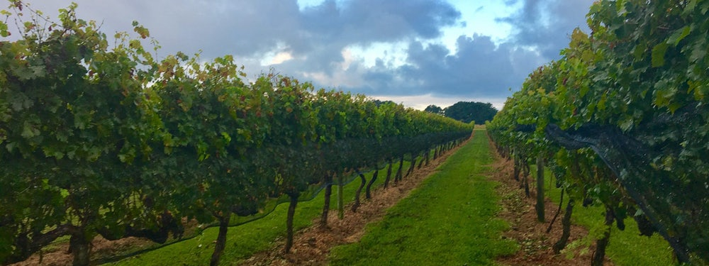 Summerwind Vineyard and Christmas Tree Farm