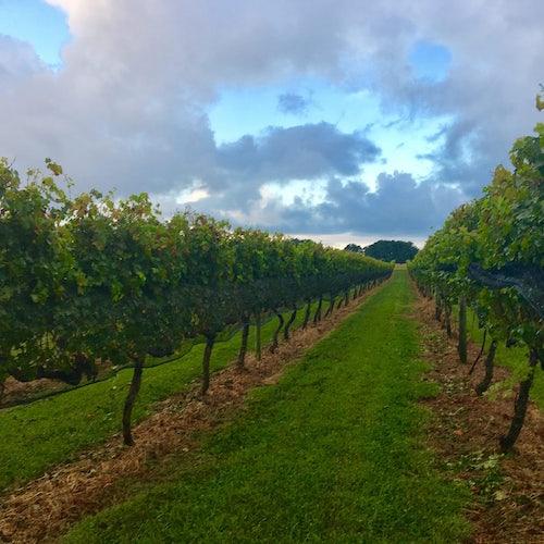 Summerwind Vineyard and Tasting Room